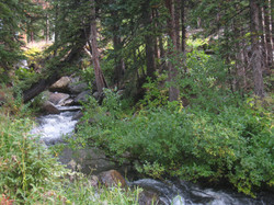 View Of The Creek Near The Cabin