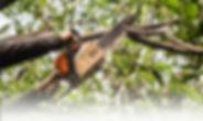 Tree-Trimming-1024x614.jpg
