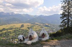 Facebook - Super day in the mountains with Princess, Zidan and Cobalt!