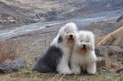 Facebook - Princess (Reata's Pipi Junior) and Zidasha (Snezhnyi Dozor Zidan) <3