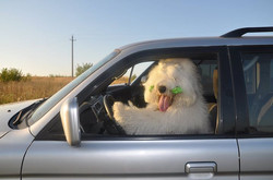 Facebook - We have a new driver! ))))