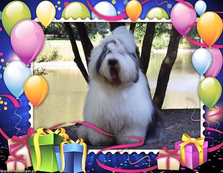 С Днем рождения Кобальт!
