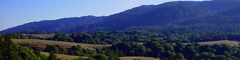 Point Reyes Hillside