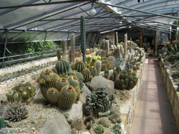 Il giardino dei cactus di Sezza