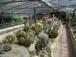 Vrt kaktusov v Seči