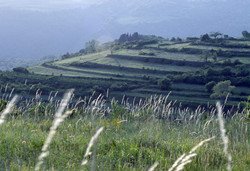 Piransko podeželje