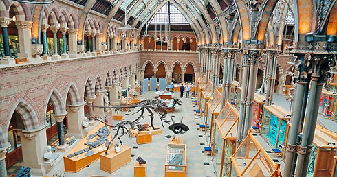 Sorbo _ Lennox in Oxford Museum of Natur