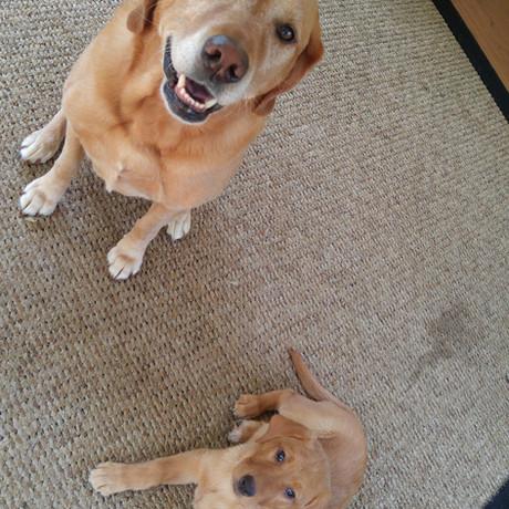 R&A pups