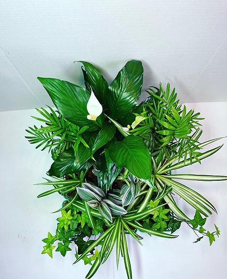 Plant Kit #2