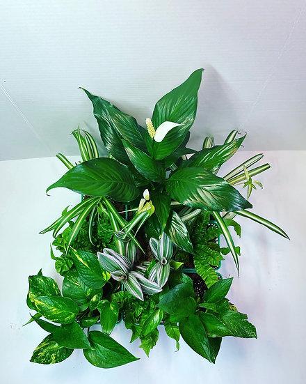 Plant Kit #1