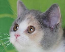 Zippy's Kittens 2018 2.jpg