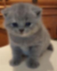 Zippy's girl at 3 weeks 2019.jpg