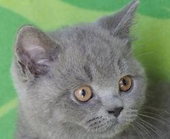 Zippy's Kittens 2018 1.jpg