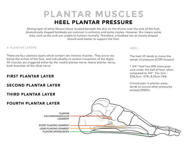 Science of Shoe Sheet - plantar.png