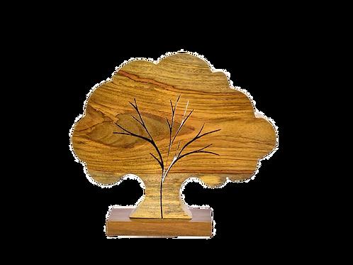 Árvore de Jacarandá M
