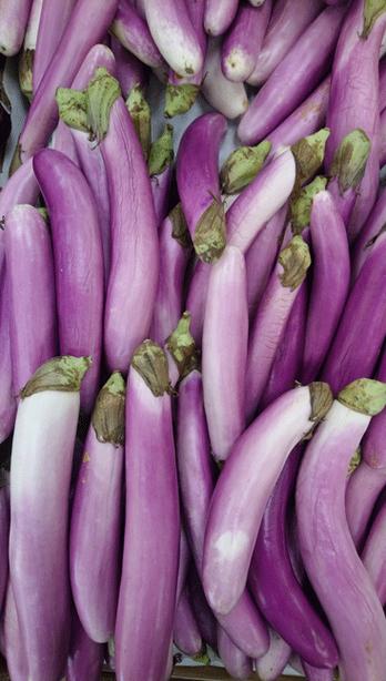 long eggplants.png