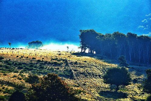 Laquiole Mist
