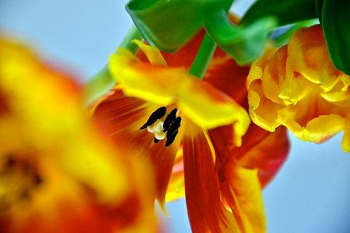Orange Bouquet 3