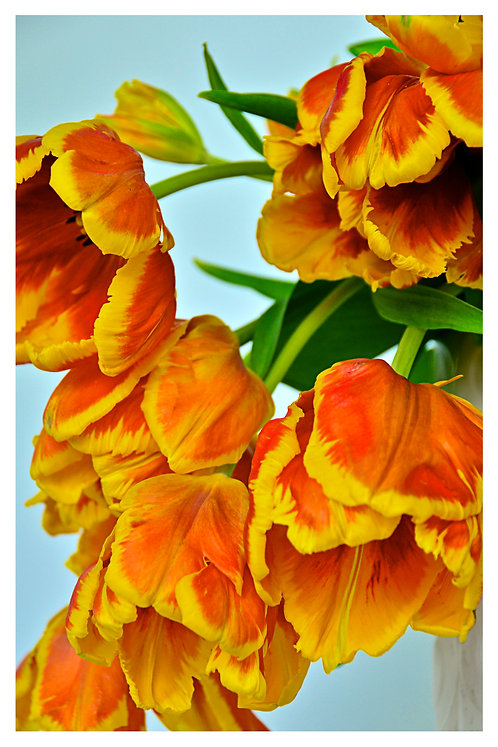 Orange Bouquet 2