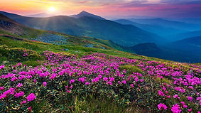 Flowers and mountains.jpg