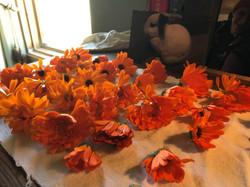 Freshly harvested calendula blossoms