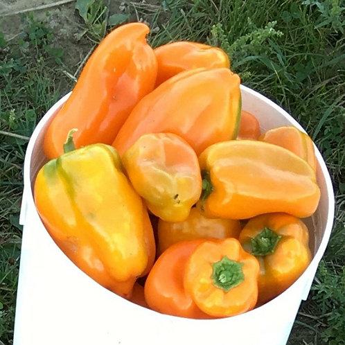 Pepper - Tangerine