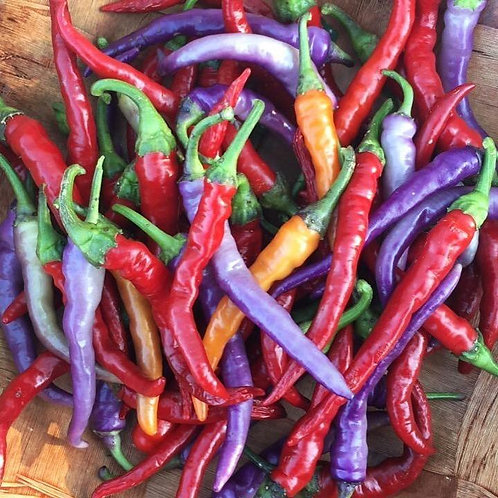 Pepper - Hot Buena Mulata
