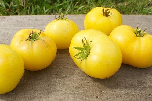 Tomato - Blanche du Québec