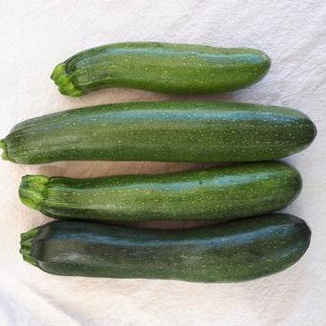 Zucchini - Mutabile