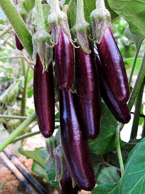 Eggplant - Little Finger