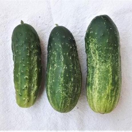 Cucumber - Homemade Pickles Pickling