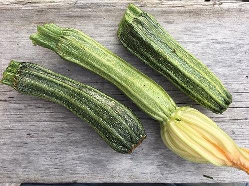 Zucchini - Costata Romanesco