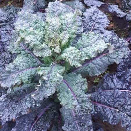 Kale Mix (Pack of 4)
