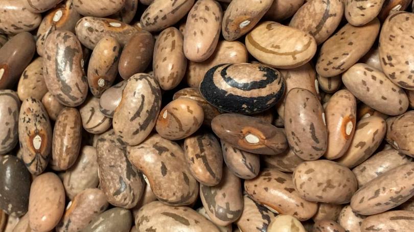 Rattlesnake bean