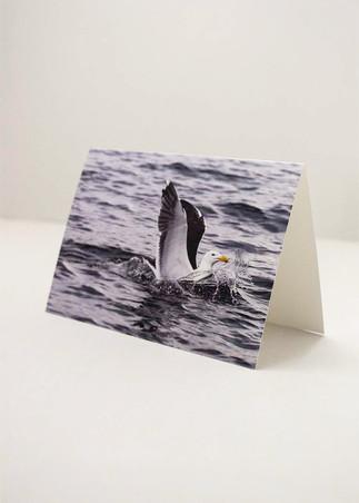 Personalizziamo le vostre cartoline