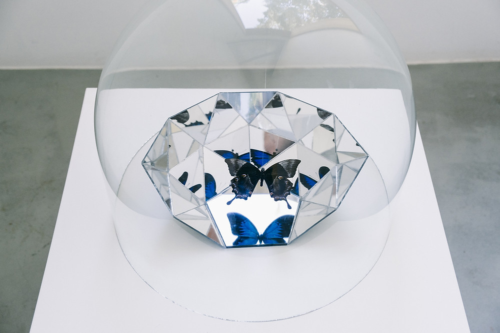 A photograph of the work titled Some Memory Prevails by Tintin Wulia (2019), a small sculptural work with a glass dome, consisting of a butterfly specimen suspended upside down showing its brownish verso side, its blue wings reflected on the mirror-plated geodesic dome fragment underneath the butterfly.