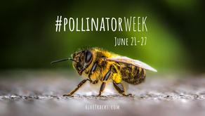 Catch the Buzz: Happy Pollinator Week!