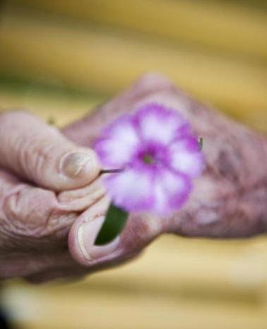 mao idoso flor.jpg