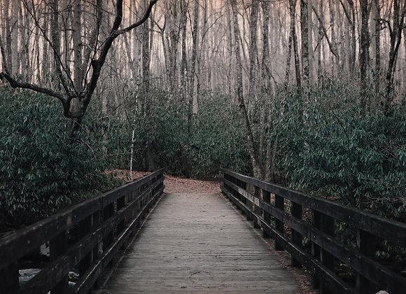 Crossing a wooden bridge towards Wintry Trees
