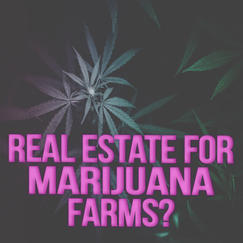 Marijuana Farms.jpg
