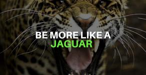 Be More Like A Jaguar
