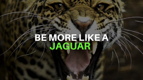 Be More Like A Jaguar
