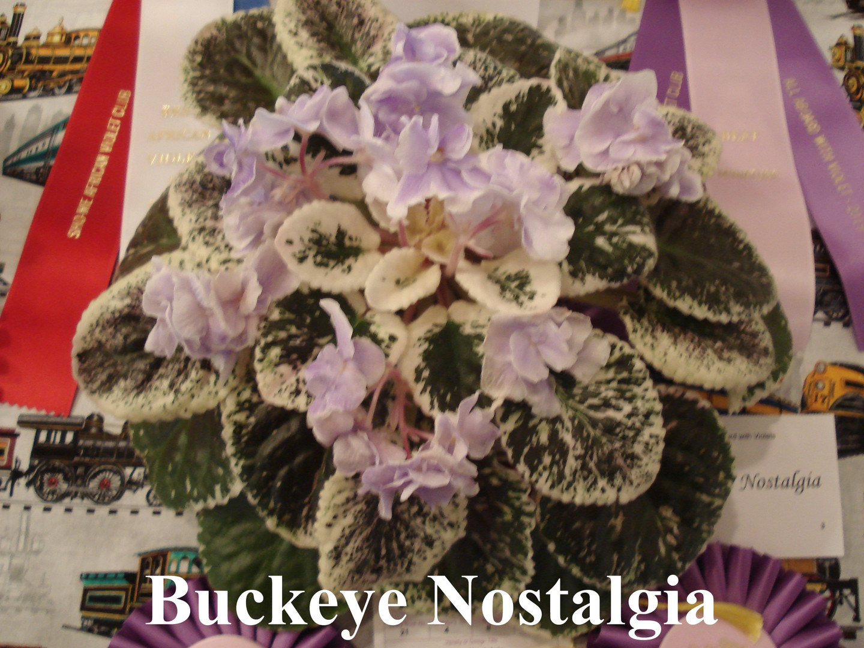 Buckeye Nostalgia.JPG