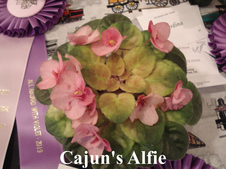 Cajun's Alfie.JPG