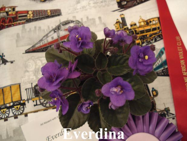 Everdina.JPG
