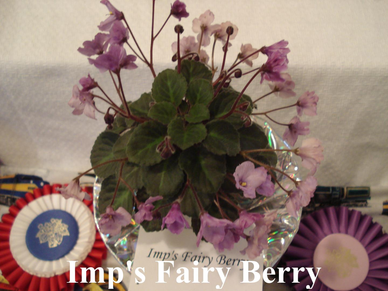 Imp's Fairy Berry.JPG