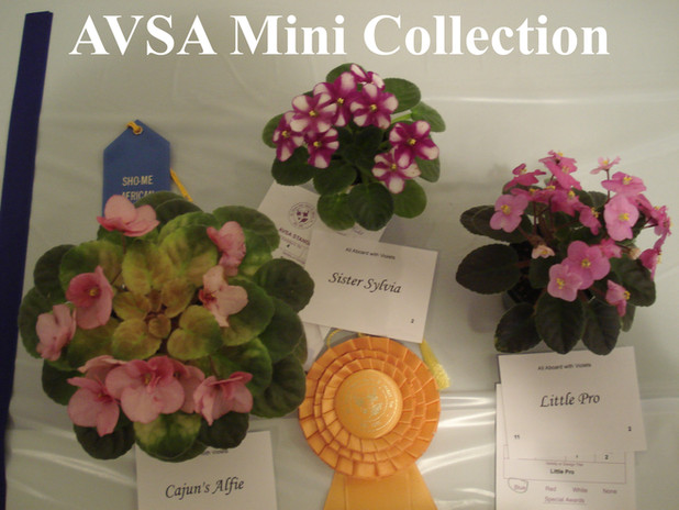 Semi Mini Collection.JPG
