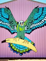 Banana Falcon