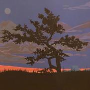 First Light on the Grasslands