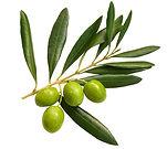 Buy Olive Trees